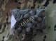 Noname - Снаряжение  патронов, Пыжи войлочные осаленные 12 М(100 гр.)